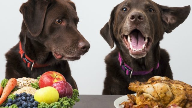 Dogs with choice of fruit to eat or turkey